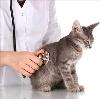 Ветеринарные клиники в Алексеевске